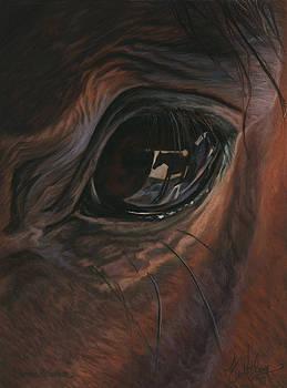 Darma's Reflection by Kim McElroy