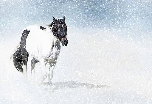 Dashing Through The Snow by Stephanie Calhoun