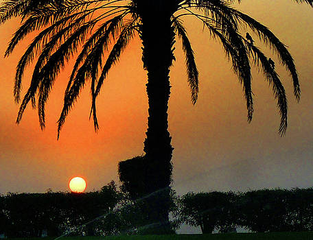 Date Palm by Farah Faizal
