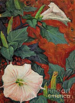 Datura Flower by Rob Corsetti
