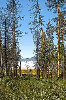 Davis Lake Morning by Larry Darnell