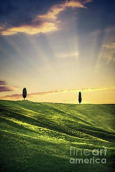 Dawn Chorus by Evelina Kremsdorf