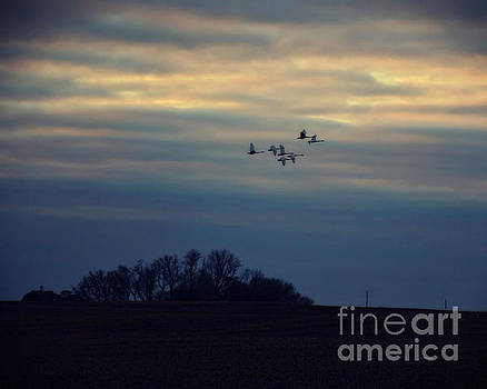Dawn Flight by Kathy M Krause
