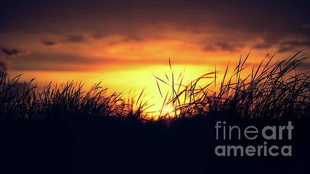 Dawn Grass by Ian McGregor