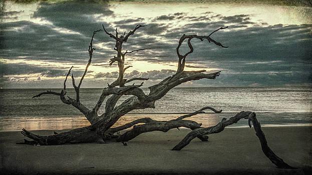 Andrew Wilson - Dawn On Driftwood Beach