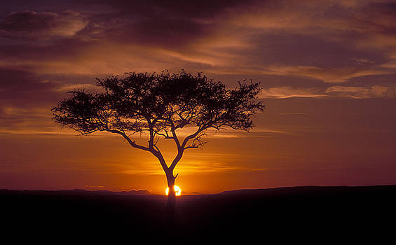 Sandra Bronstein - Dawn on the Masai Mara