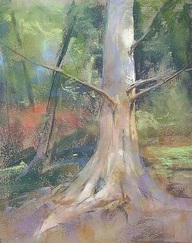 Dawn Redwood by Kelly Lanning Phipps