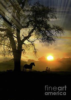 Dawn by Stephanie Laird
