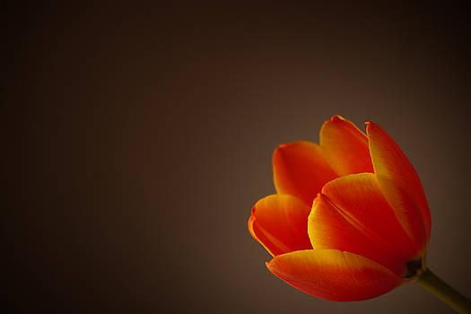 Dawning by Dorcas Caraballo