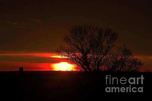 Dawn's Delight by Ian McGregor
