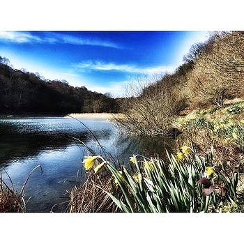 Daffodils in the sun along The Cleveland Way by Rebecca Bromwich