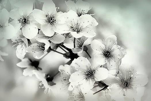 Day Dreams by Darlene Kwiatkowski