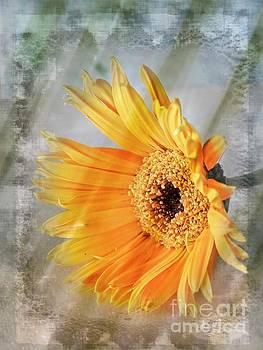 Day Spring Daisy by Ella Kaye Dickey