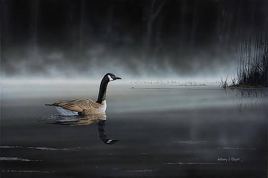 Daybreak Sentry by Anthony J Padgett