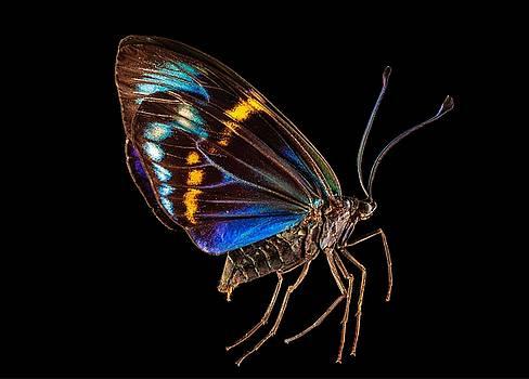 Daylight Flying Moth by Gary Shepard