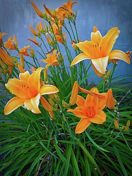 Daylilies  by Gary De Capua