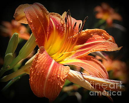 Daylily - After The Rain by Dora Sofia Caputo Photographic Art and Design