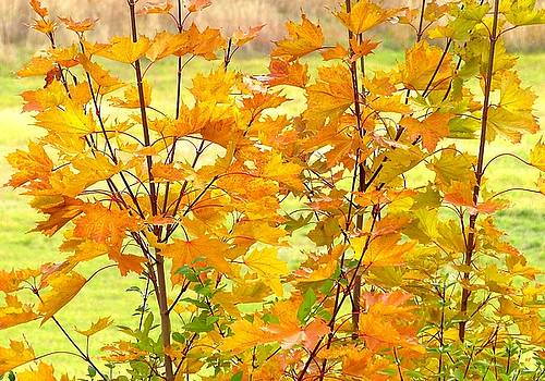 Days Of Autumn 1 by Will Borden