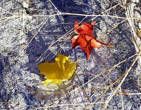 Days Of Autumn 5 by Will Borden
