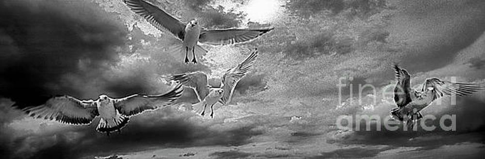 Daytona Beach Fl gulls stop action black and white by Tom Jelen