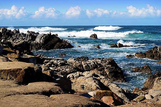 Joyce Dickens - Dazzling Monterey Bay