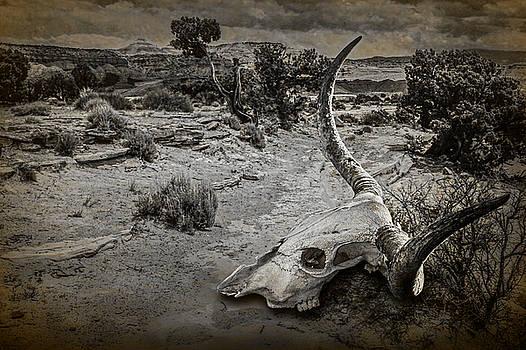 Randall Nyhof - Dead Cow Skull of a Longhorn Steer
