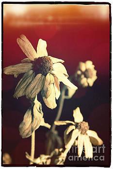 BERNARD JAUBERT - Dead flowers