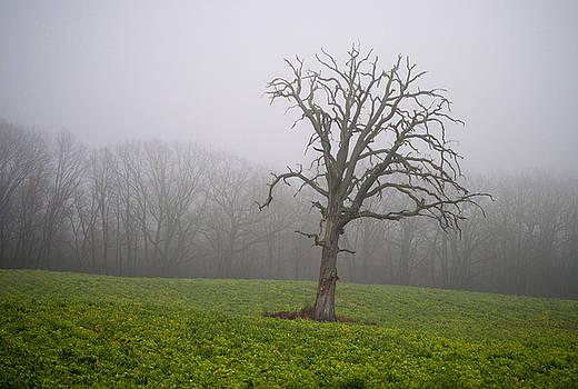 Dead Oak Tree at Dusk by Samantha Boehnke
