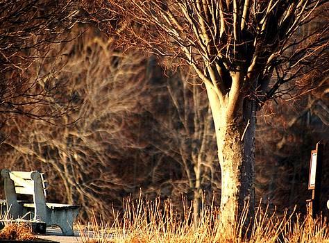 Dead of Winter by Lucia Vicari