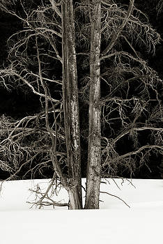 Dead of Winter by Scott Wheeler