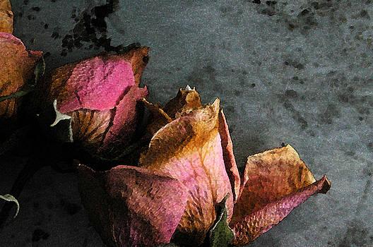 Kathi Shotwell - Dead Roses 1
