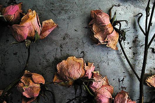 Kathi Shotwell - Dead Roses 4