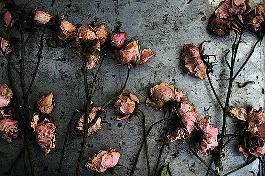 Kathi Shotwell - Dead Roses 5