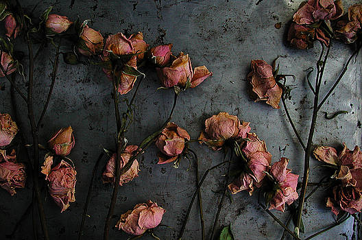 Kathi Shotwell - Dead Roses 6 - photo