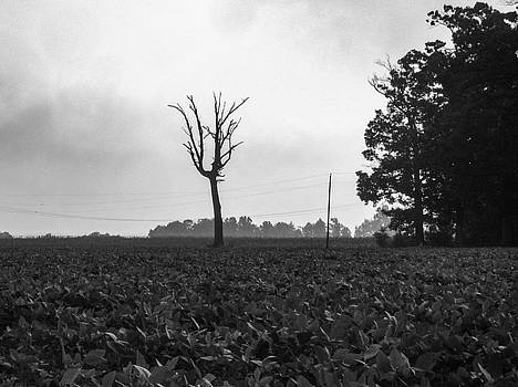 Dead Tree and Soy by Joi High