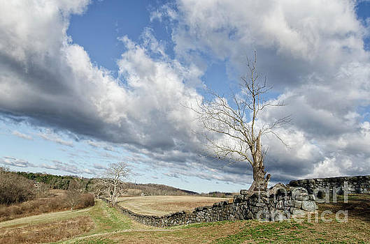 Dead Tree and Stone Wall by Melissa Fague