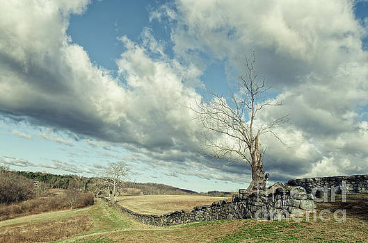 Dead Tree and Stone Wall Split Toned by Melissa Fague