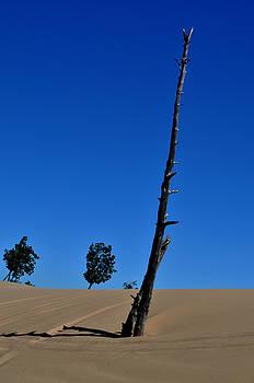 Dead Tree at Silver Lake Sand Dunes by Samantha Boehnke