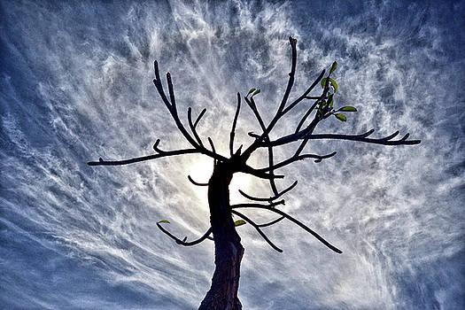 Dead Tree in St. Johns Antigua by Bill Swartwout