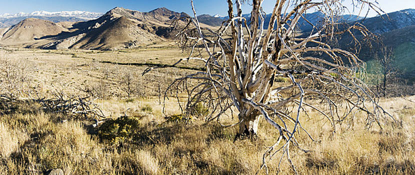 Dead Tree Panorama by Norman  Andrus