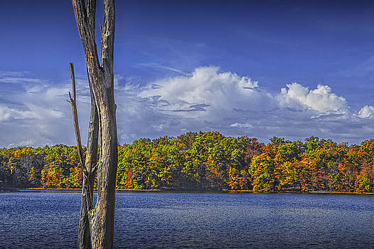 Randall Nyhof - Dead Tree Trunk during Autumn by Hall Lake