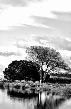dead Tree by Werner Lehmann