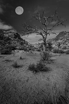 Rick Strobaugh - Dead Tree with Full Moon