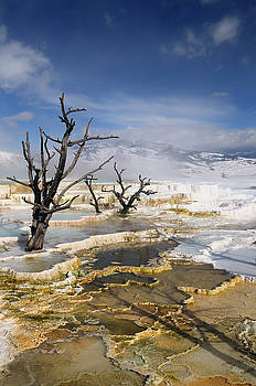 Reimar Gaertner - Dead trees and steaming colored travertine pools with snow at th