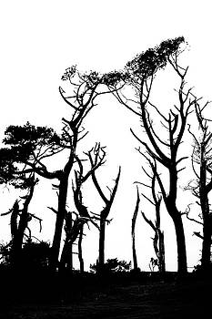 Dead trees in silhouette by Russ Dixon