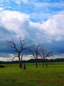 Dead Trees by Judy  Waller
