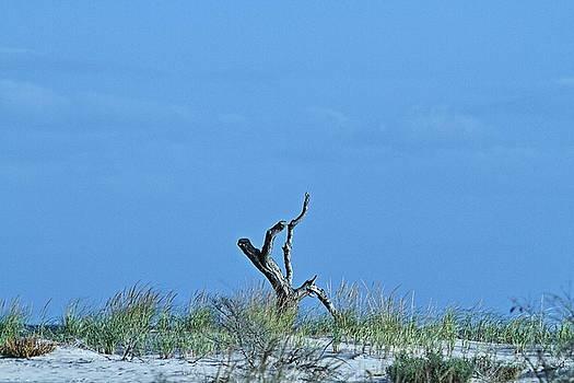 Dead Wood by Linda C Johnson