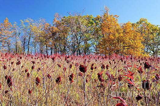 Dan Carmichael - Deadly Beauty in the Blue Ridge