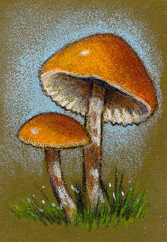Joyce Geleynse - Deadly Galerina Mushrooms in Color Pencil