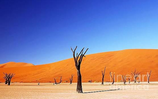 Deadvlei, Namibia by Wibke W